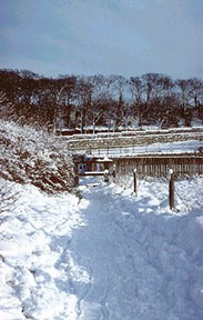 picture of the photopath on cleadon hills