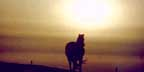photo of horse in sunset